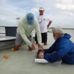 Dave Philipp tagging bonefish in Abaco