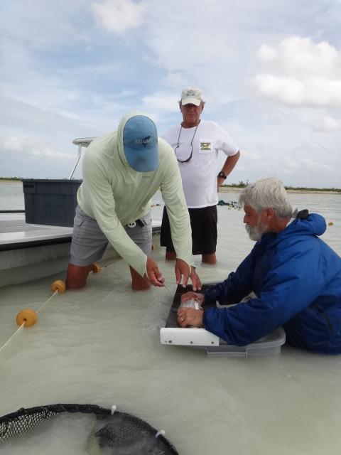 Dave Philipp tagging bonefish in Abaco