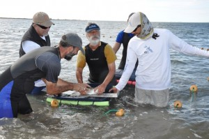 CEI flats team and others tagging bonefish