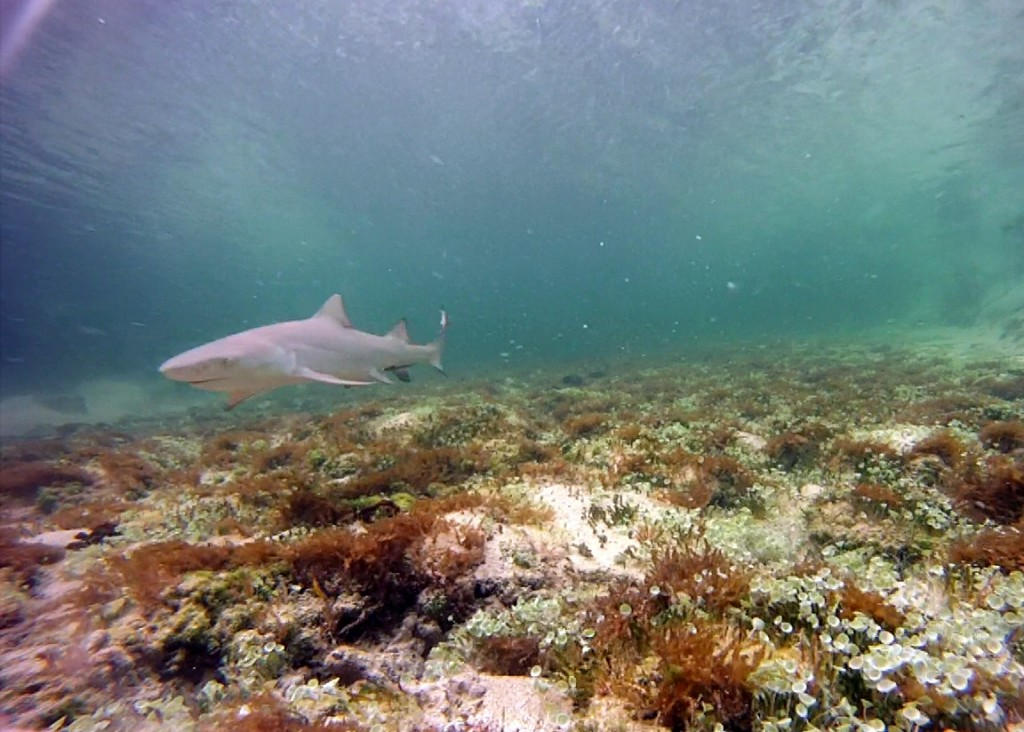 Cape Eleuthera Institute, unbaited underwater camera