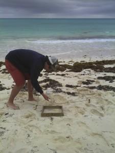 Gap student beach plastic CEI