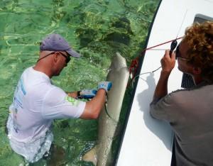 Shark Update Morgans Bluff
