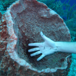 Lillian's hand getting cleaned at an underwater fish cleaning station!