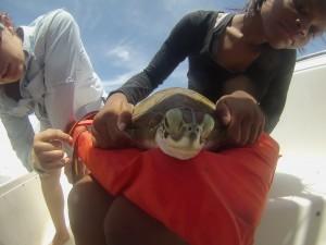 Campers handling a green sea turtle