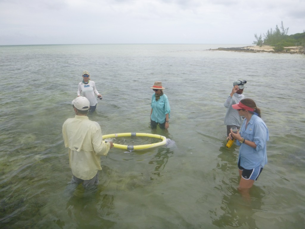 Catching bonefish with nets to tag and measure.