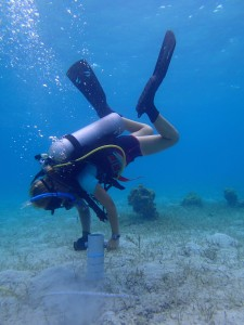 Kayla Jeffreys takes a seagrass core in the patch reefs