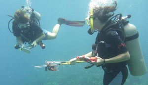 lionfish transects utila operation wallacea alicia hendrix