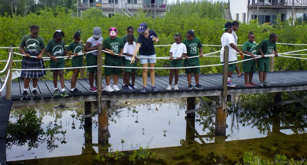 Wemyss bight primary EP mangroves