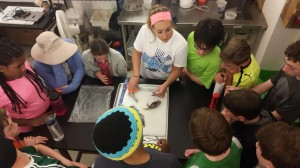 lionfish dissection ratner
