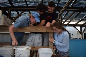 Getting to know the aquaponics system first hand