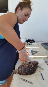 Intern Alanna working through lionfish dissections