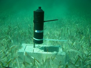 An acoustic receiver positioned on a seagrass bed in the Grand Lucayan Waterway on Grand Bahama.