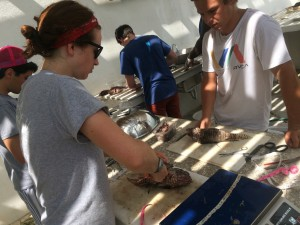 The Sustainable Fisheries Team in the midst of dissections