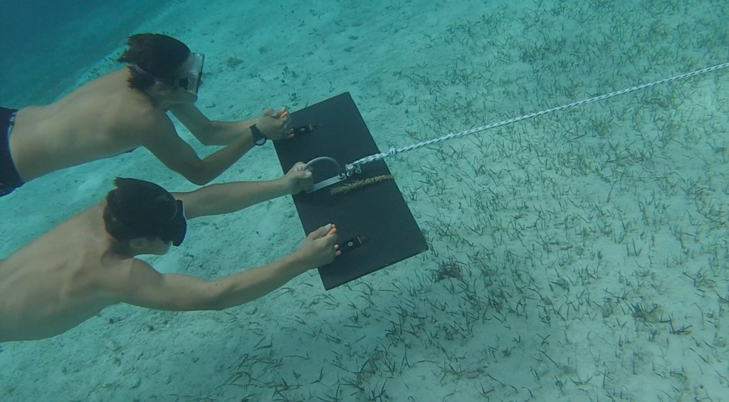 Two students being towed by a manta tow board observing the bottom for queen conch.