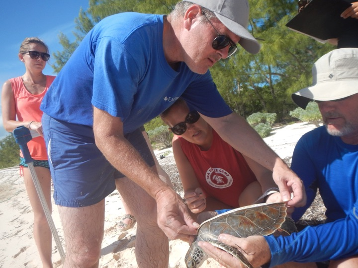 Earthwatch participant Bill Creasy learns how to take the curved carapace length of a small juvenile green turtle