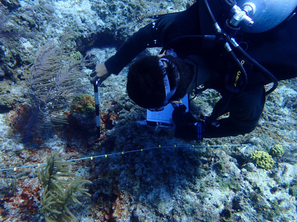 A coral survey is conducted, identifying, measuring, and assessing health of species found along the reef (Photo C. Dahlgren).