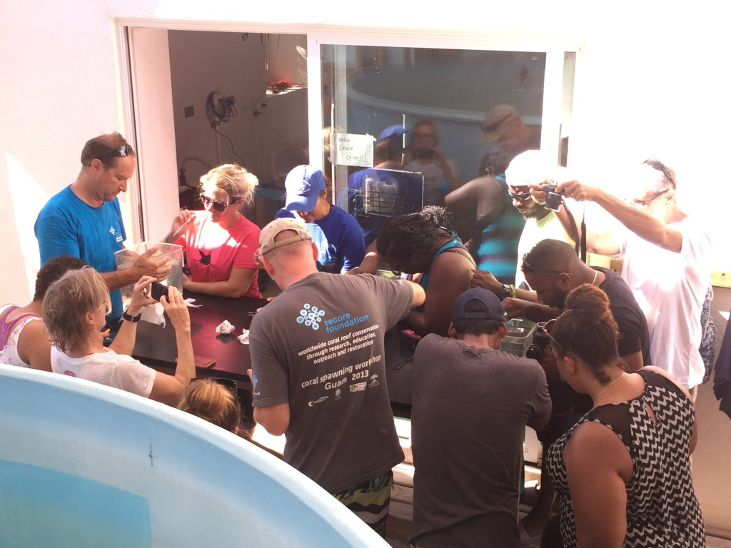 Coral reproduction workshop led by Dr. Dirk Peterson from SECORE International. Here, various scientists and conservationists are collecting brooding coral larvae from individual tanks to be observed under the microscope!