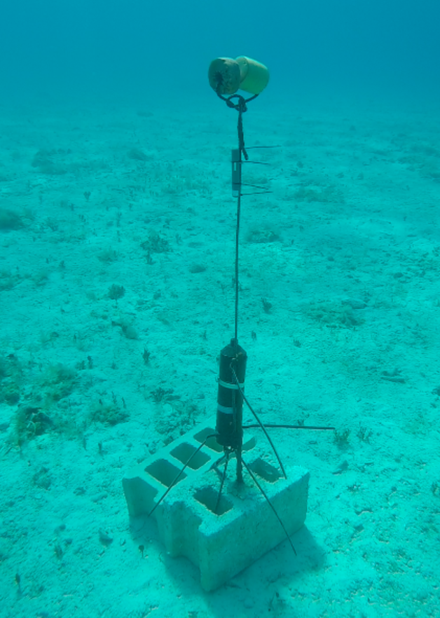 VEMCO receivers are attached to cinder blocks with rebar posts. This receiver has a SYNC tag positioned above it, allowing for triangulation of position with other nearby receivers and allowing for the fine scale movement of bonefish to be assessed.
